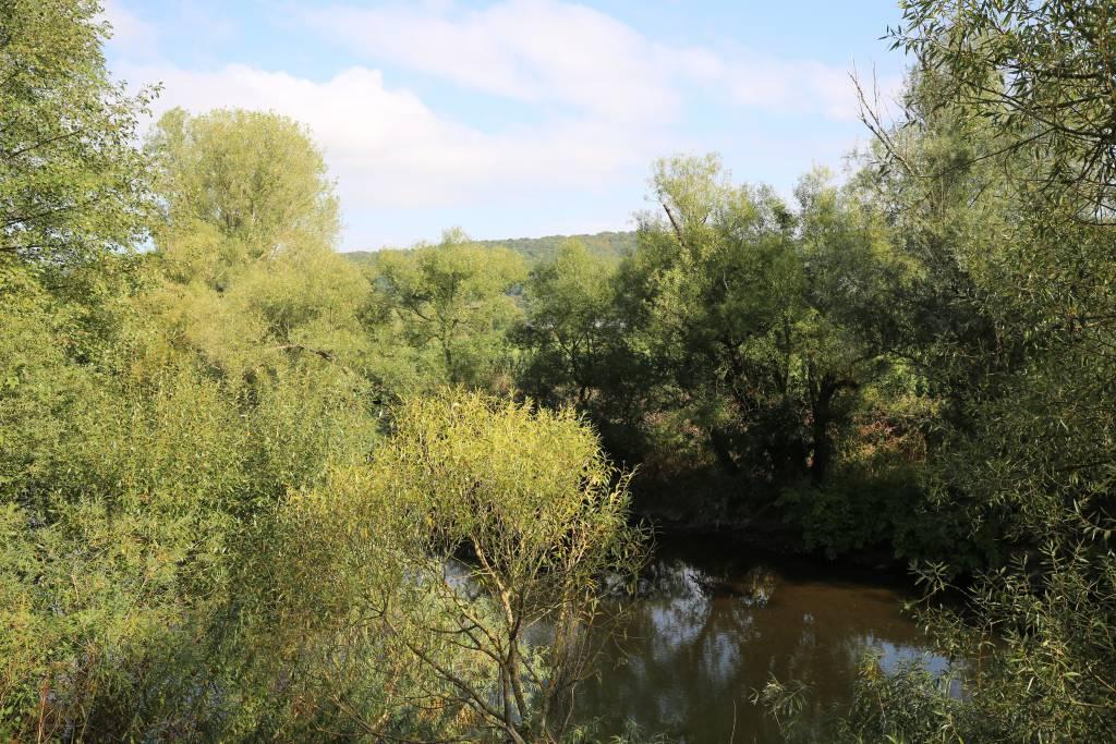 Kampf gegen das Insektensterben: Rhein-Sieg-Kreis mit Artenschutzprojekten Quelle: Rhein-Sieg-Kreis