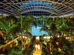 palmenparadies_2