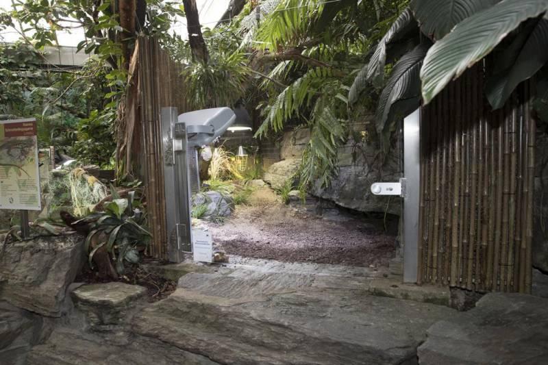 Kölner Zoo zeigt hochbedrohte Schildkröten Quelle: AG Zoologischer Garten Köln