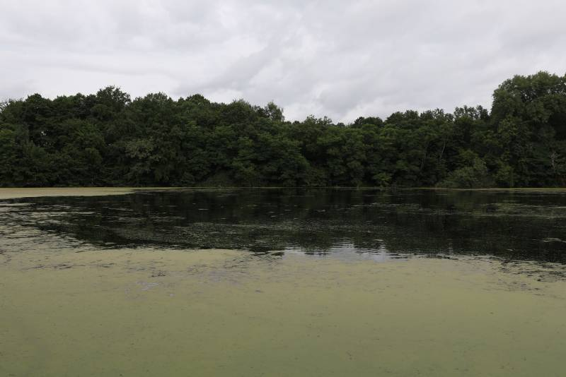 Was schwimmt da im Trerichsweiher? Unbekannter Unterwasserräuber sorgte für Aufregung bei Spaziergängern
