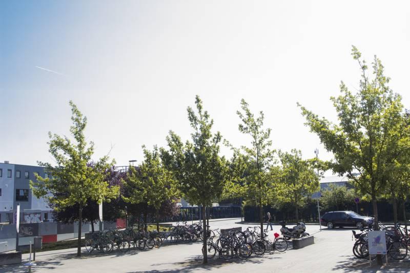 Ferienprogamm im Jugendpark Hennef Quelle : Stadt Hennef
