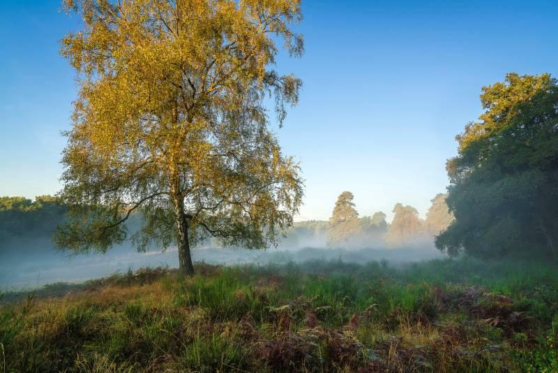 Reizvolle Bilder aus der Wahner Heide Idylle pur auf Fotos im Kalender 2018: