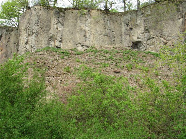 Rodungen im Auftrag des Artenschutzes Quelle: Rhein Sieg Kreis