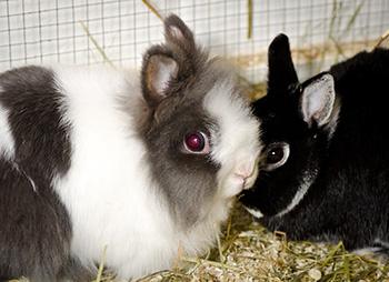 Kaninchen wollen Kaninchen sein Mümmel-Paar sucht Menschen, die lieber gucken als anfassen