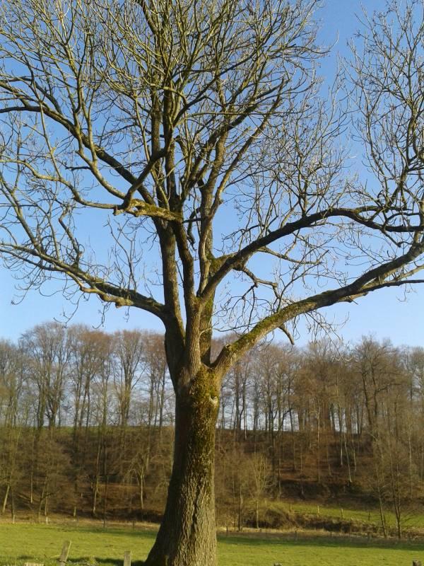 """Bäume im Winter – """"An ihren Knospen sollt ihr sie erkennen"""" Quelle: Stadt Lohmar"""