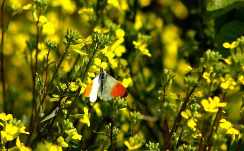 Austellung zum Insektenschwund in Troisdorf Quelle: NABU