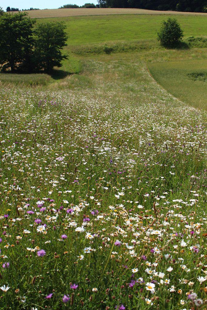 Flächen für Blühstreifen gesucht
