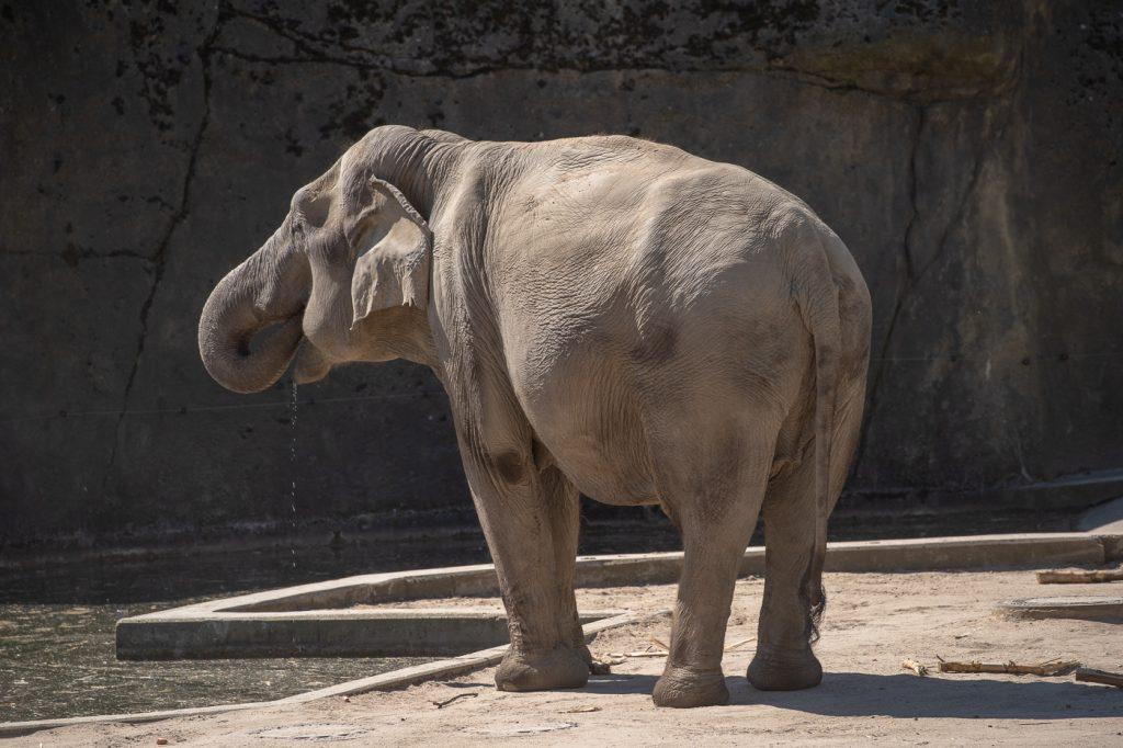 Schöne Nachrichten von der Kölner Elefantenherde: