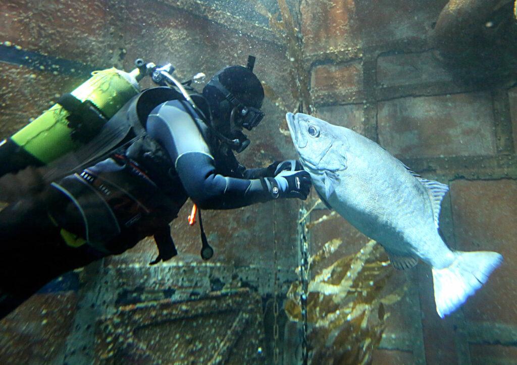 15 Jahre SEA LIFE Königswinter – Geburtstag unter Wasser