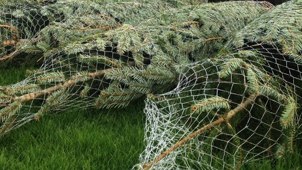 Baumlieferdienst für Risikogruppen