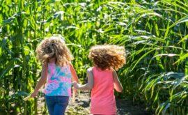 04_(C)Krewelshof Maislabyrinth-Spass zusammen