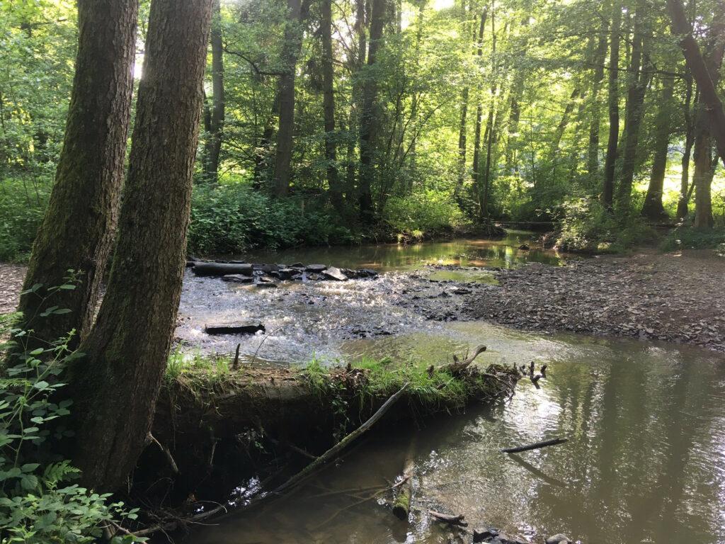 Naturschutzgebiet Naafbachtal – Unter Druck durch seine Beliebtheit