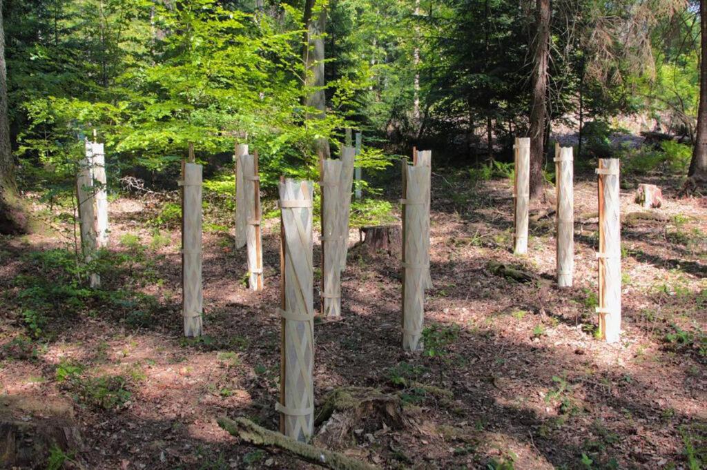 """Spendenaktion: """"Wir helfen dem Wald"""""""